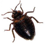 Bed Bugs Control South Delhi